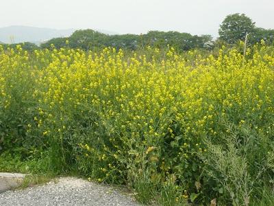 花の道(1)