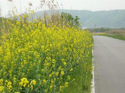 花の道(2)