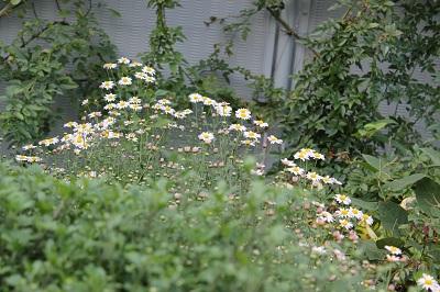本屋さんの花壇/8