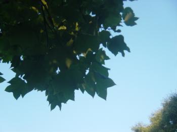akinosoras.jpg