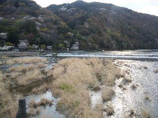 嵐山お花見1