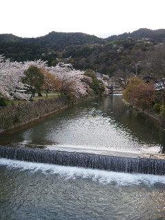 嵐山お花見2