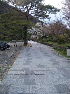 嵐山お花見9