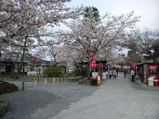 嵐山お花見10