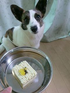 えっ!今日は、ケーキでしか♪