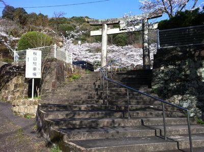 sakurayama10.jpg