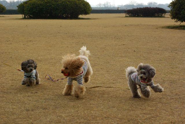 公園run 040