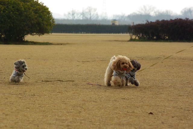 公園run 026