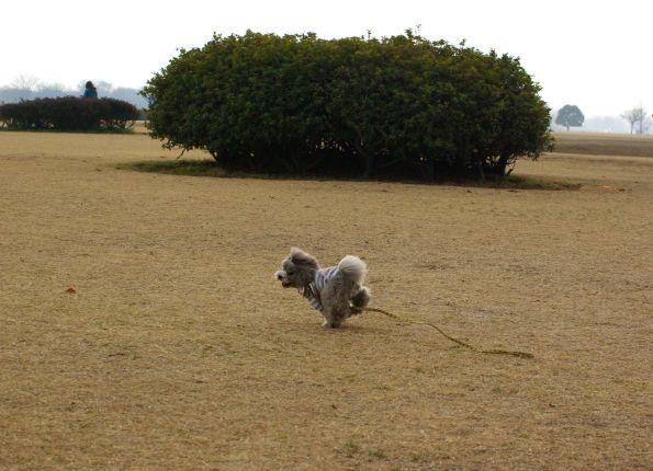 公園run 008