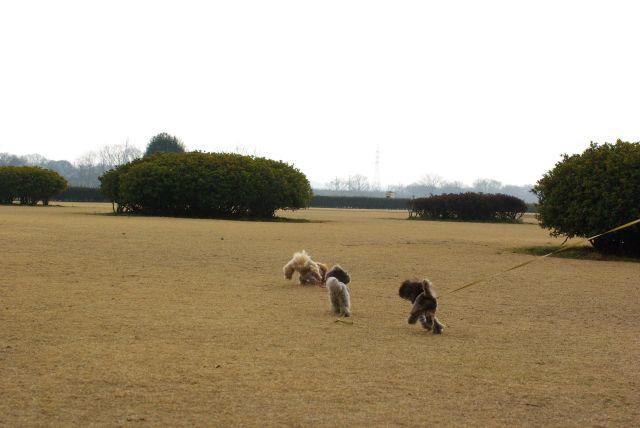 公園run 022