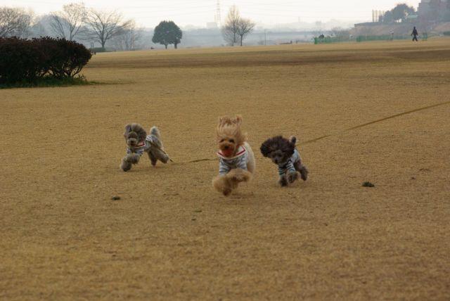 公園run 210
