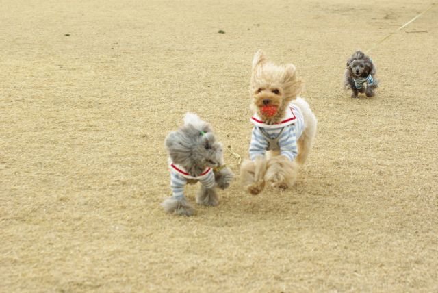 公園run 203