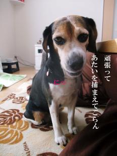 コピー ~ DSCF3698