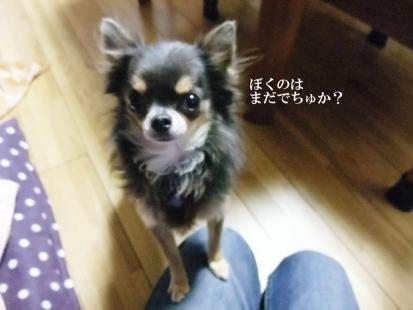 コピー ~ DSCF4162