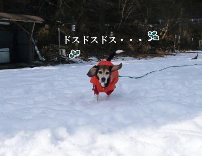 コピー ~ DSCF4243
