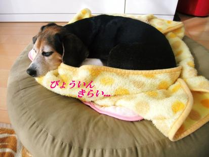 コピー ~ DSCF0308