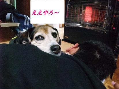 コピー ~ DSCF0317