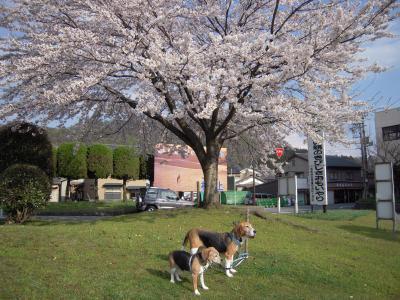 freeai-20110425-sanpo01.jpg