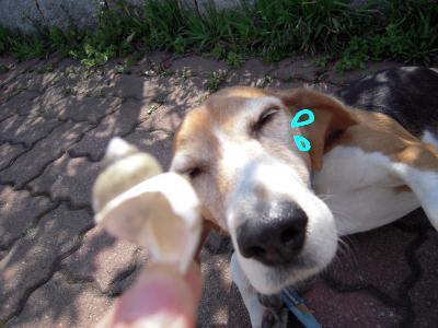 freeda-20110418-sanpo01.jpg