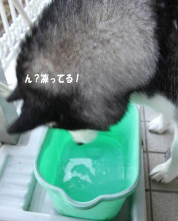 20100115_2.jpg