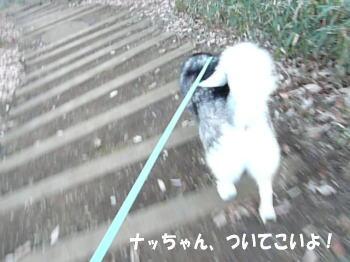 20100116_5.jpg