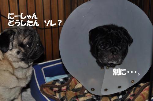 コピー (1) ~ DSC_0572 500