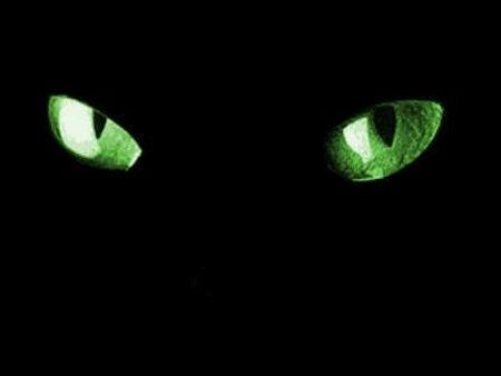 cat-eyes.jpg