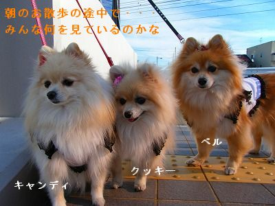 s-2010_0104トール作品倉庫0006