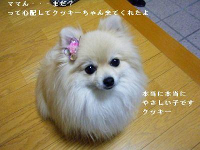 s-2010_0108トール作品倉庫0017