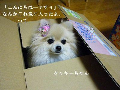 s-2010_0110トール作品倉庫0005