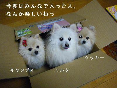 s-2010_0110トール作品倉庫0004
