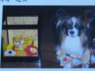 アリスの年賀状