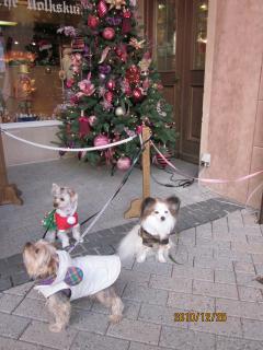 3ワンズのクリスマス