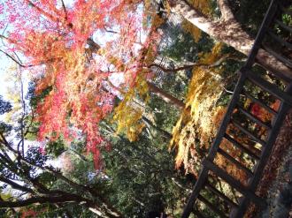 犬山紅葉2
