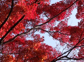 犬山紅葉3