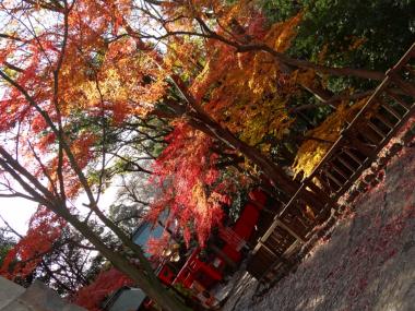 犬山紅葉8