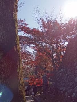 犬山紅葉5