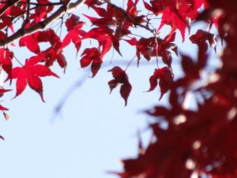 犬山紅葉4