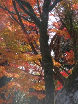 犬山紅葉7