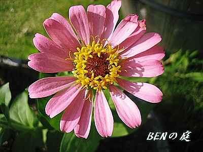 BENの庭