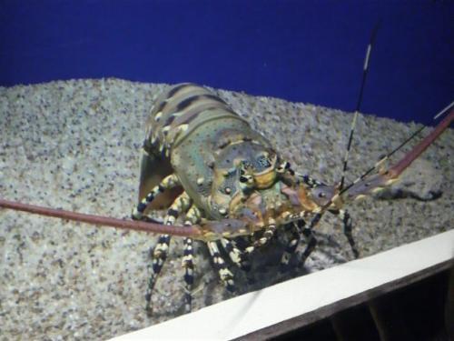 20080827水族館4
