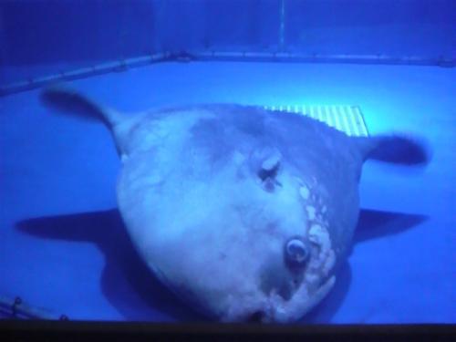 20080827水族館5