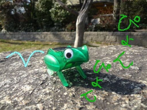 elso-ra-frogg5.jpg