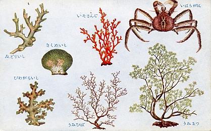 貝類及甲殻軟体類3