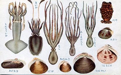 貝類及甲殻軟体類5