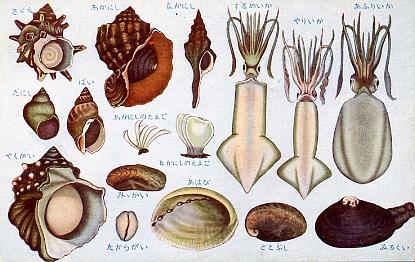 貝類及甲殻軟体類4