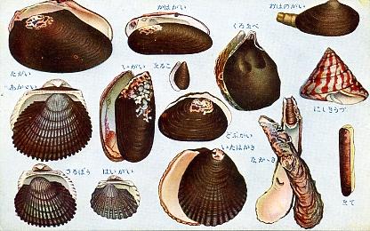 貝類及甲殻軟体類8