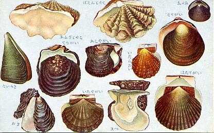 貝類及甲殻軟体類7