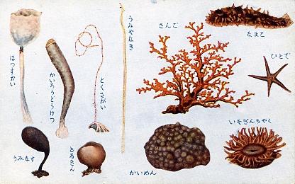 貝類及甲殻軟体類6