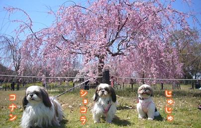 110405_daisen_01.jpg
